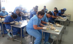 UCSUR y Biovet organizan el II Curso de Avicultura en Lima
