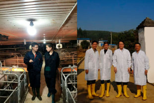Technical visit in pig farms in China
