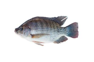 Response to the addition of Alquernat Immuplus in the diet of tilapia nilotica