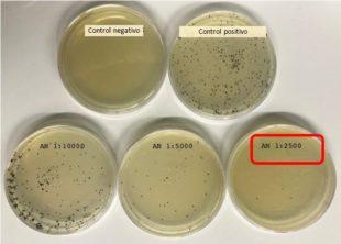 Reducción de las colonias de Clostridium perfringens por acción del anillo cimenol en placas de cultivo
