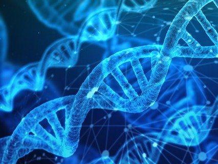 Identificación de genes y proteínas tejido-específicas inducidos por un acondicionador intestinal