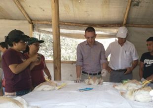 Biovet S.A. imparte sesiones de capacitación técnica en empresas del sector avícola de Perú
