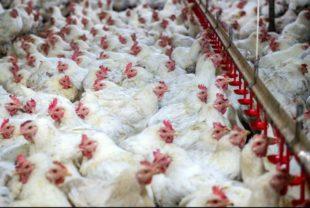 Biovet S.A. visita algunos de los mayores productores avícolas de Sudáfrica