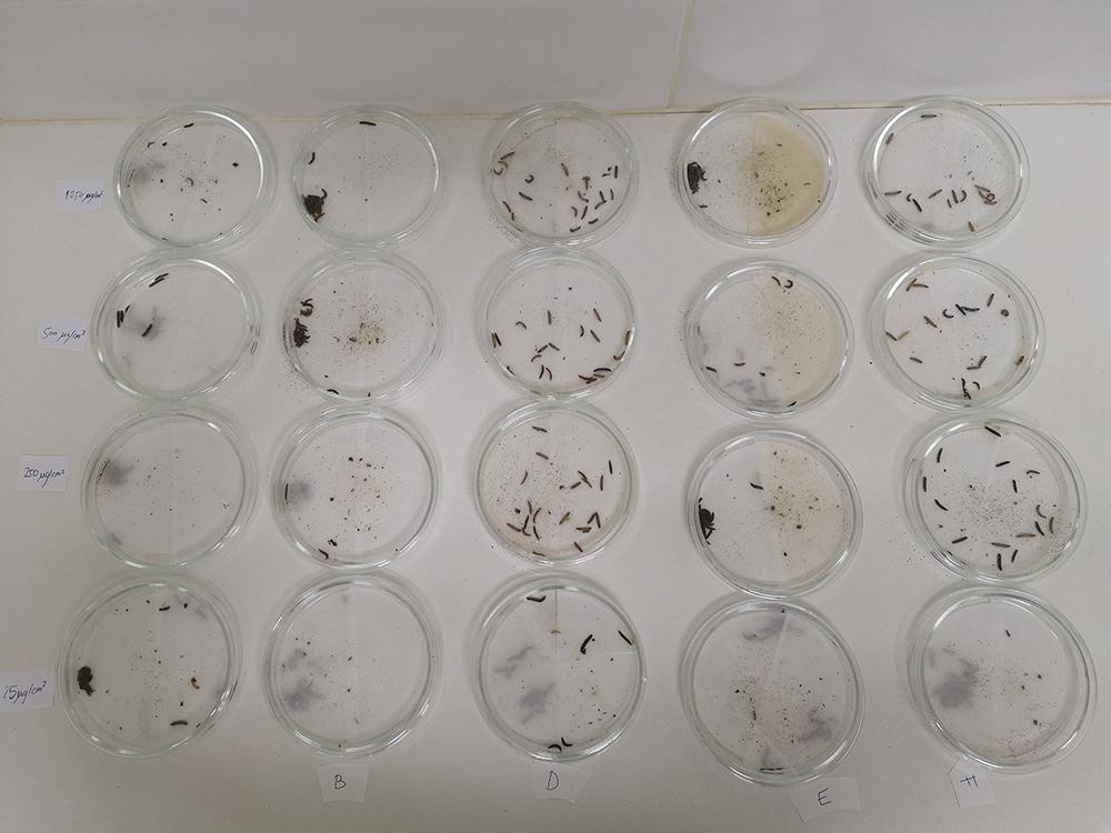 alquerfeed jacium nuevo repelente contra Alphitobius