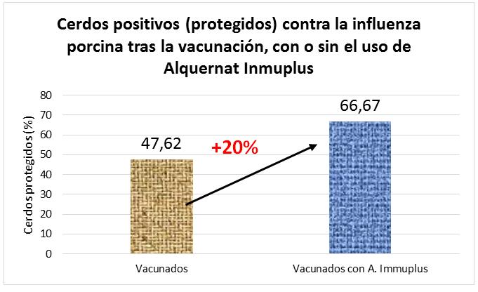 Alquernat Inmuplus optimiza la produccion de anticuerpos frente a la gripe porcina