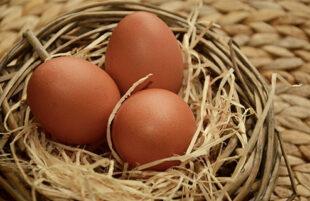 El estrés térmico en ponedoras: gama de productos Alquerfeed de Biovet