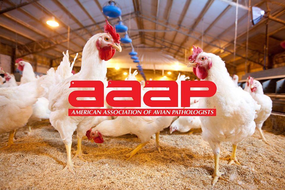 Conferencia de Alquermold Natural para la prevenciónd e la enteritis necrótica en el AAAP