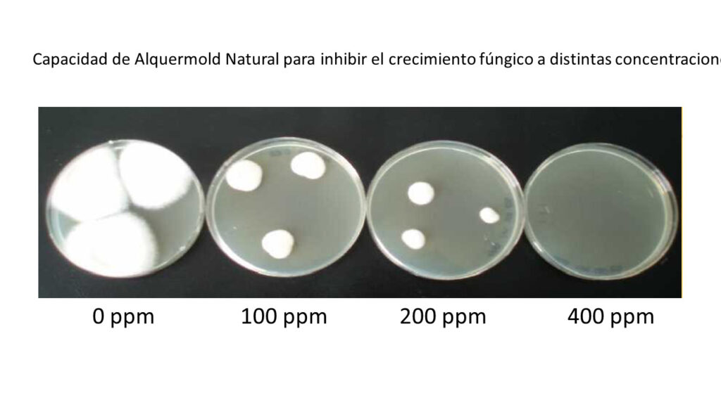 Capacity of Alquermold Natural to inhibit fungal growth at different concentrations