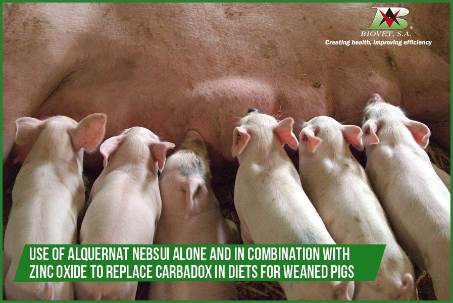 Use of Alquernat Nebsui alone and in combination with zinc oxide to replace carbadox in diets for weaned pigs
