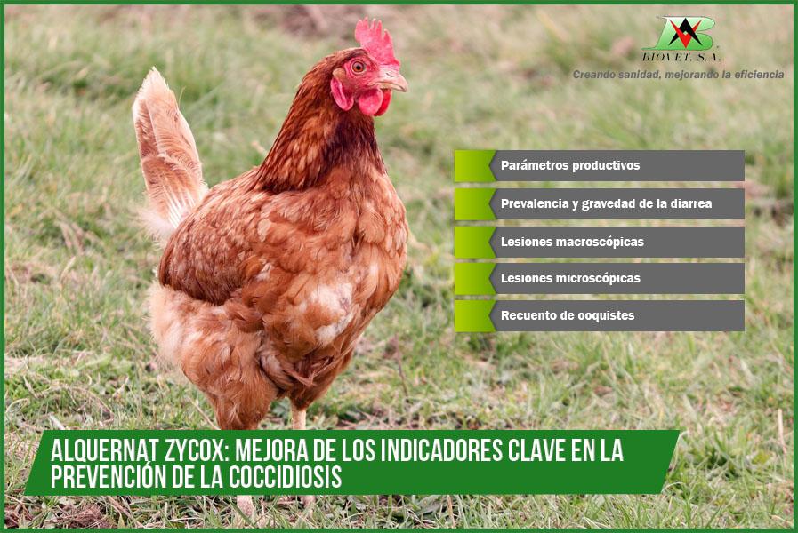 Alquernat Zycox: cinco indicadores demuestran su eficacia para la prevención de la coccidiosis