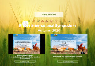 Alquernat Nebsui, effective natural alternative to improve productive parameters at weaning