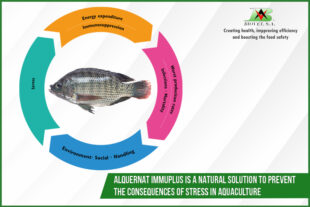 Alquernat Immuplus is a natural solution to prevent the consequences of stress in aquaculture