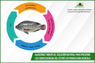 Alquernat Inmuplus: solución natural para prevenir las consecuencias del estrés en producción acuícola