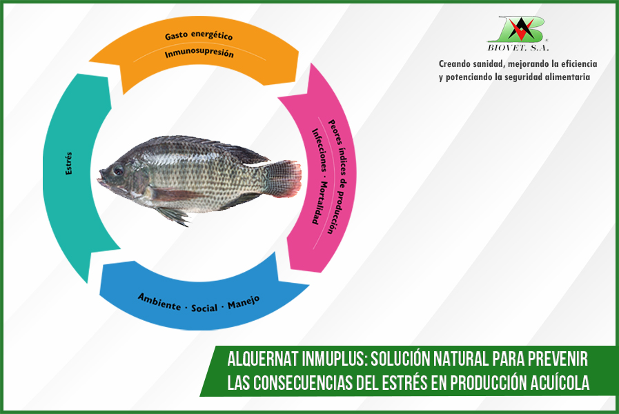 Alquernat Inmplus solución natural para prevenir las consecuencias del estrés en producción acuícola