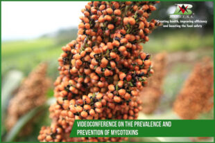 Videoconference on the prevalence and prevention of mycotoxins