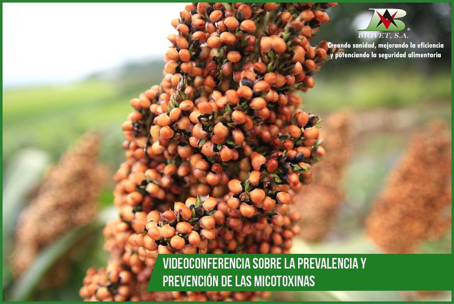 Videoconferencia sobre la prevalencia y prevención de las micotoxinas en los países de la Comunidad de Estados Independientes (CEI)