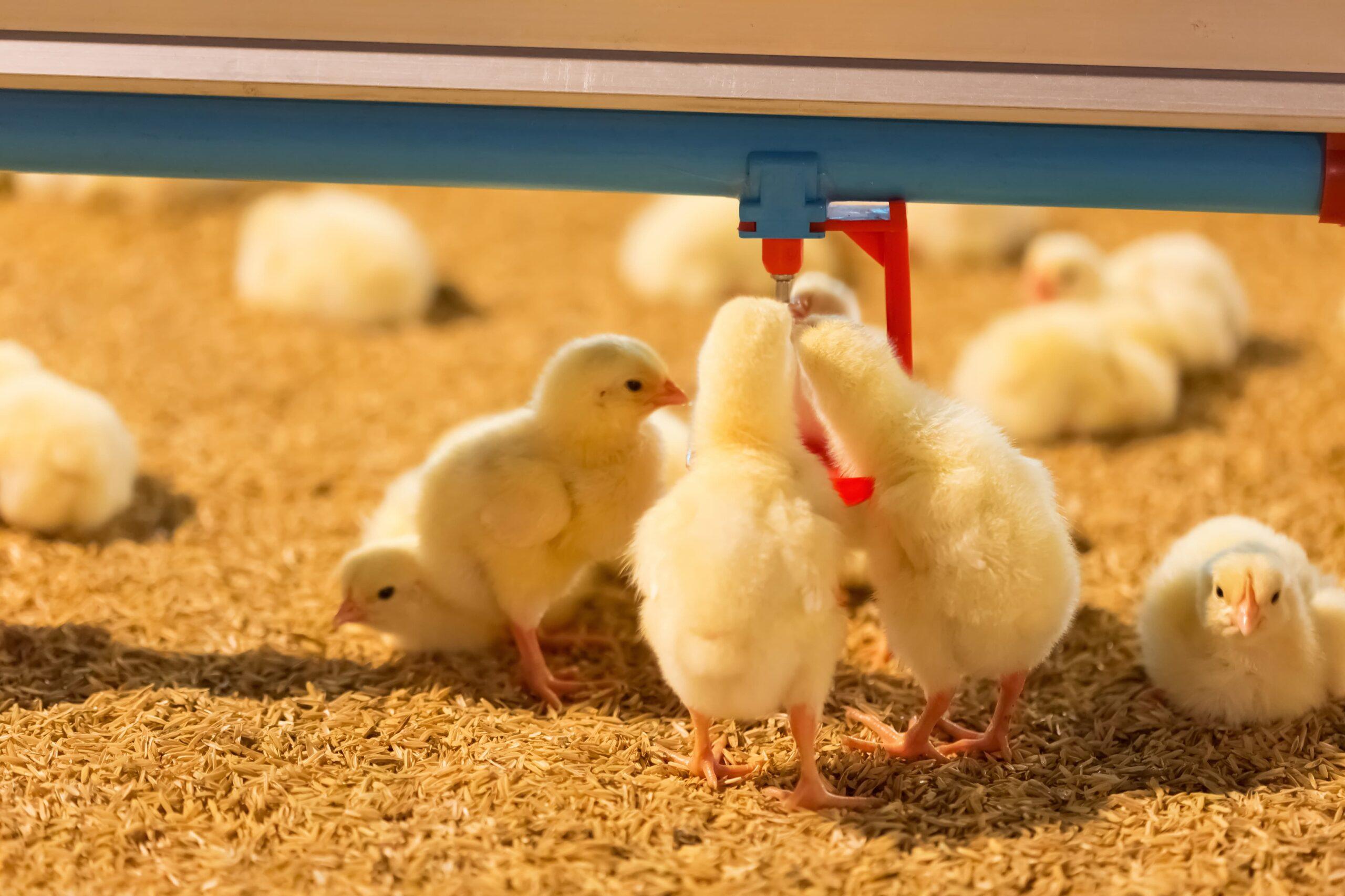 Biovet S.A. aditivos naturales para la alimentación animal