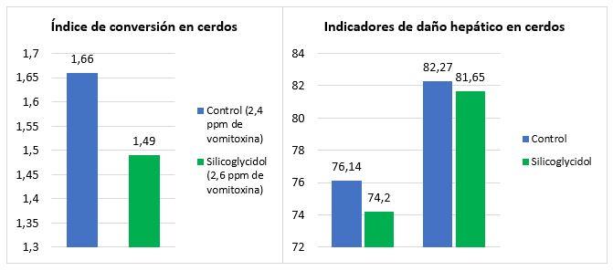 El Silicoglycidol previene los efectos del deoxinivalenol, micotoxina muy prevalente este 2020