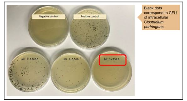 Results in culture plates with different concentrations of Alquermold Natural (AN) against Salmonella