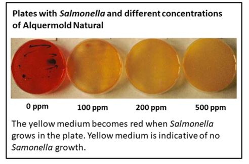 Results in culture plates with different concentrations of Alquermold Natural against Salmonella