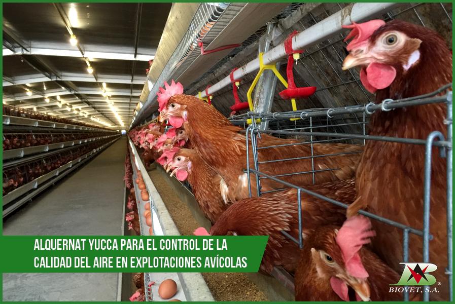 Alquernat Yucca para el control de la calidad del aire en explotaciones avícolas