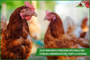 Uso de pronutrientes optimizadores intestinales para estimular la inmunidad intestinal frente a la coccidiosis