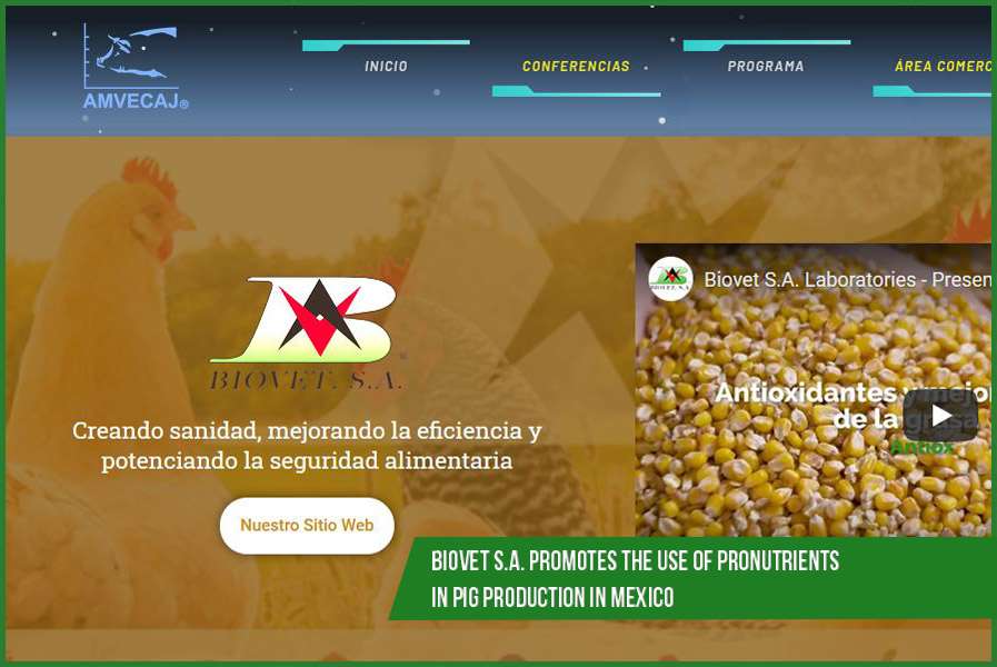 Biovet S.A. promotes the use of pronutrients in pig production in Mexico