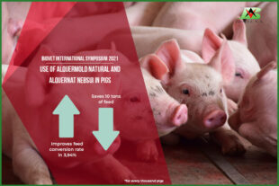 Mycotoxin binders and pronutrients in pig production, lead the Biovet International Symposium 2021