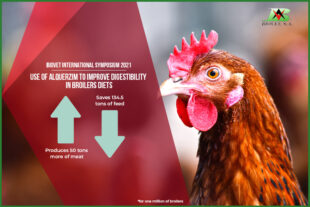 Use of Alquerzim to improve digestibility in broilers diets