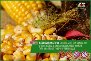 Alquermold Natural L reduces the contamination of Clostridium, E. coli and Salmonella by more than 96%