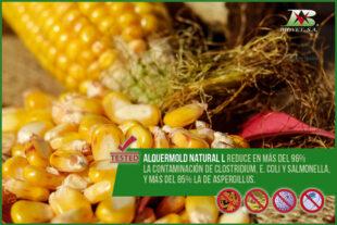 Alquermold Natural L consigue reducir en más del 96% la contaminación de Clostridium, E. coli y Salmonella