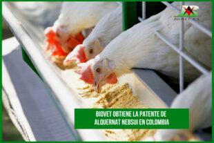 Biovet obtiene la patente de Alquernat Nebsui en Colombia