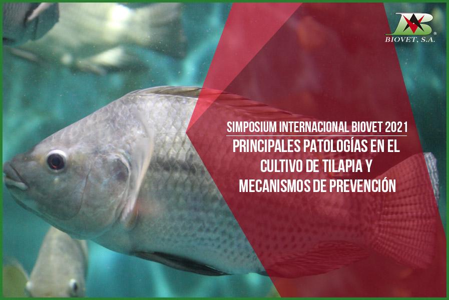 Principales patologías en el cultivo de tilapia y mecanismos de prevención
