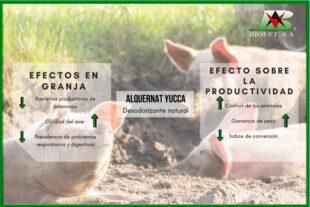 Reducción del amoniaco ambiental para mejorar la productividad en las granjas