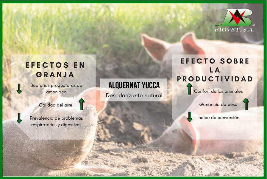 Reducción del amoniaco en granjas