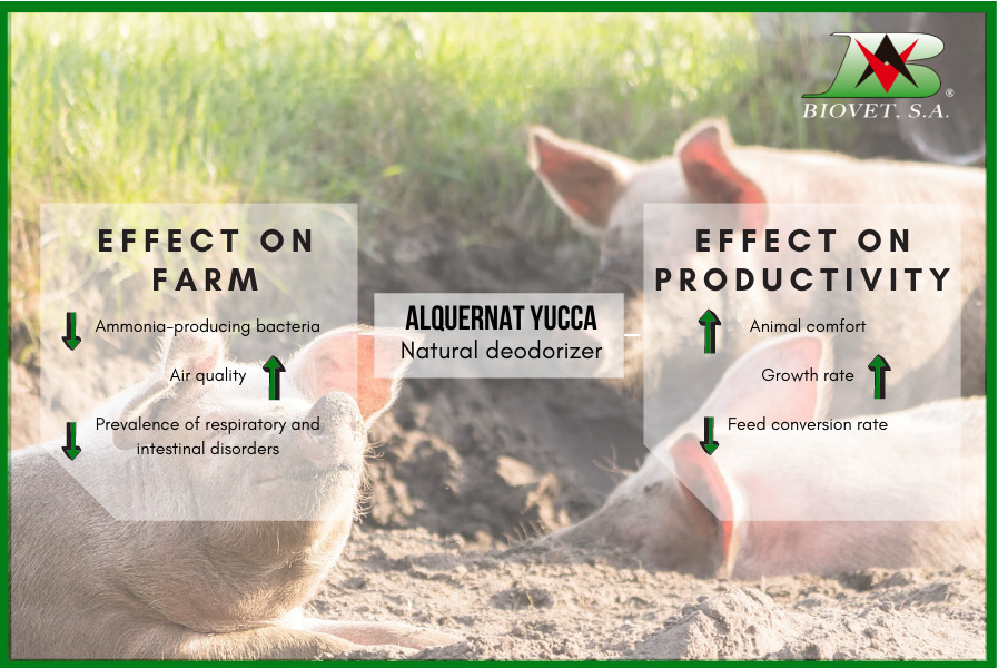 Reduction of ammonia on farms