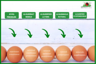 OVUM line: natural solutions for layers