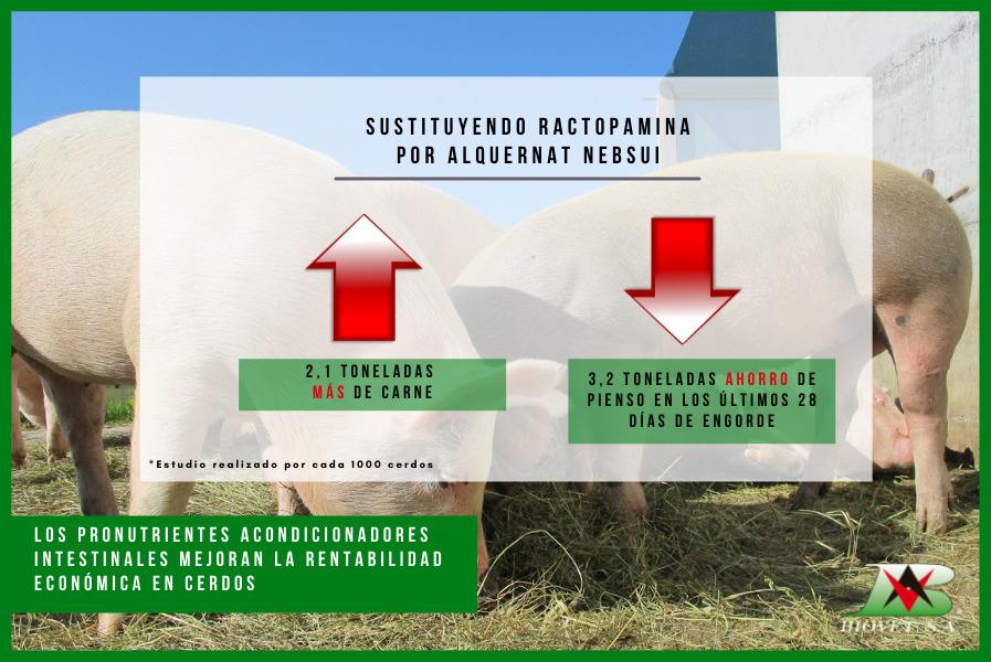 Los pronutrientes acondicionadores intestinales mejoran la rentabilidad económica en cerdos