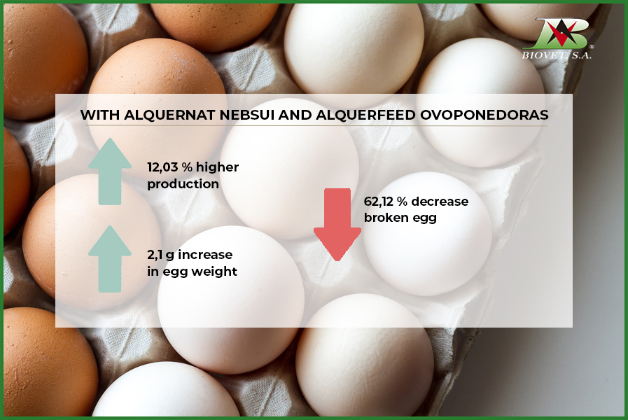 Pronutrients improve eggshell weight and quality