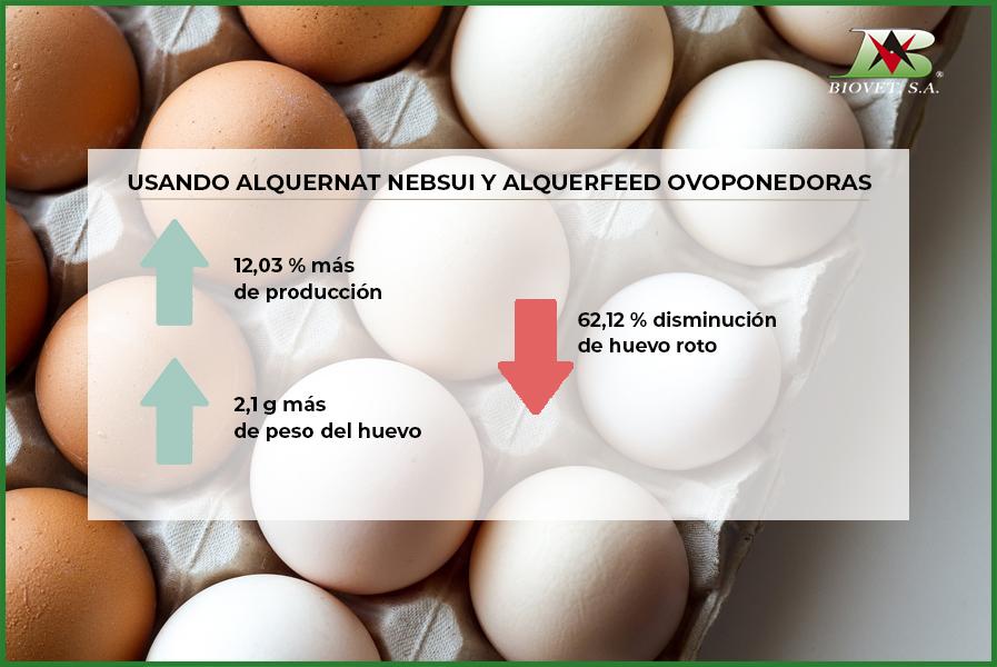 Los pronutrientes mejoran el peso y la calidad de la cáscara de los huevos