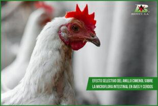 Efecto selectivo del anillo cimenol sobre la microflora intestinal en aves y cerdos